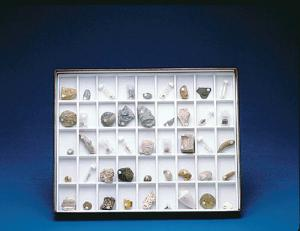 Student Stratigraphic Fossil Collection