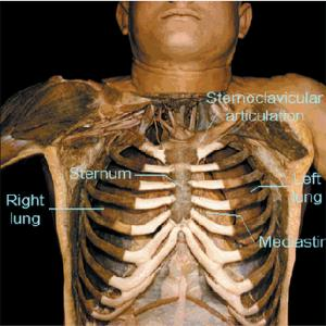 Human 3-D Dissection CD-ROM