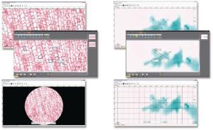 Ward's® Digital Slides: Middle School Life Science Set