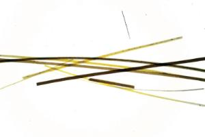 Ward's® Whole-Mounted Hair Slides