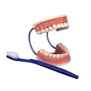 3B Scientific® Giant Dental Care Set