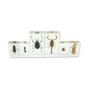Insect plastomount collection set of 6