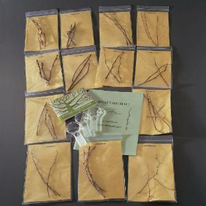 Twig Identification Kit
