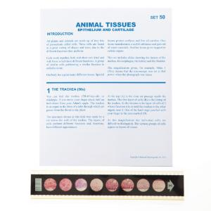 Animal Tissues: Epithelium/Cartilage Microslide