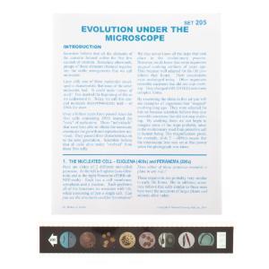 Evolution Under the Microscope Microslide
