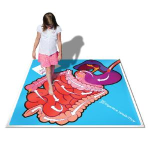 Digestive Walk-Thru Classroom Activity