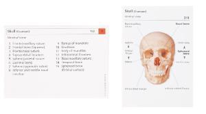 Skeletal System Flash Cards, 3B Scientific®