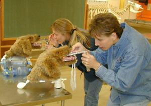 Rescue Critters® K-9 Intubation Trainer