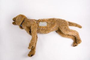 Rescue Critters® K-9 Thoracentesis Manikin