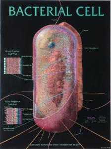 Biocam Bacterial Charts