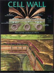BioCam Cell Structure And Function Charts