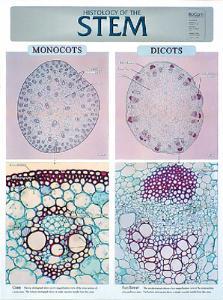 BioCam Plant Histology Charts