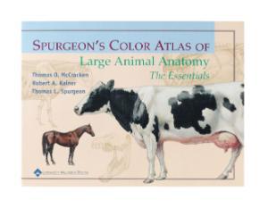 Surgeon's Color Atlas Of Large Animal Anatomy