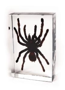 Large tarantula plastomount
