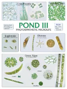 BioCam Pond Life Wall Charts