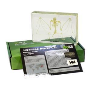 Large bat skeleton plastomount