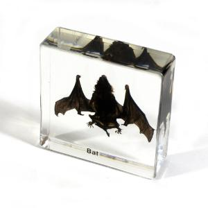 Small bat plastomount