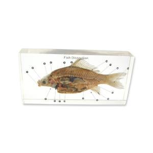 Large fish dissection plastomount