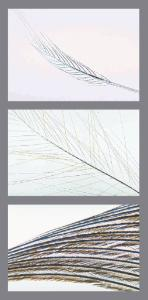 Feathers, Composite Slide