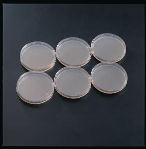 Ward's® Prepared Yeast, Genetic (YEAD) Agar