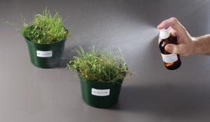 Mechanisms of Herbicides Lab Activity