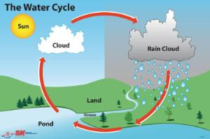 Elementary Water Cycle Poster | Boreal Science