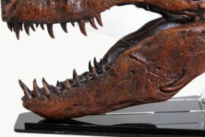 T-REX skull quarter scale replica