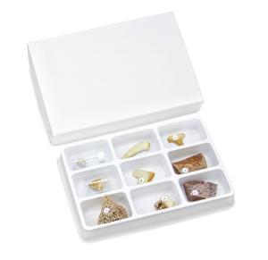 Chordata Collection Set