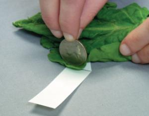 Ward's® Chromatography of Spinach Kit