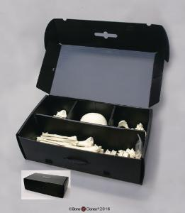 BoneClones® Plastic Bone Storage