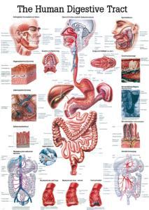Rudiger Human Systems Charts