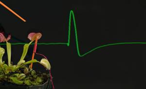 Backyard Brains® Plant Spikerbox