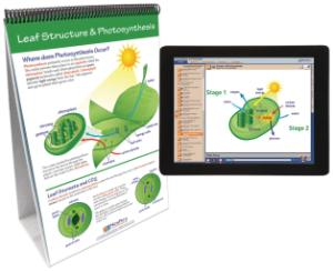 Flipchart with Multimedia Lesson:Photosynthesis