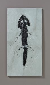 <i>Sclerocephalus hauseri</i> (Permian)