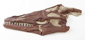 <i>Mosasaurus</i> sp. (Cretaceous)