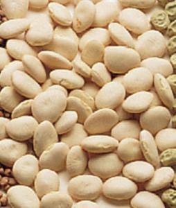 Lima Bean Seeds