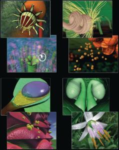 Secret Life of Plants Video Set