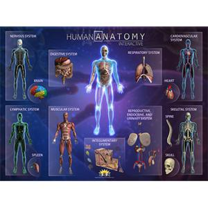 Smart Mat Human Anatomy