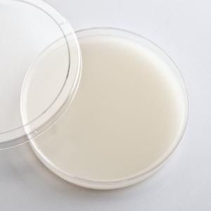Prepared Starch Agar Media