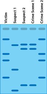 DNA Fingerprinting Activity Kit