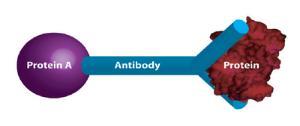 Immunotechnology Activity Kit