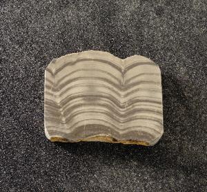 Algal Dolomite (Silurian)