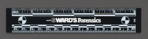 "Ward's® 6"" Photo Rules"