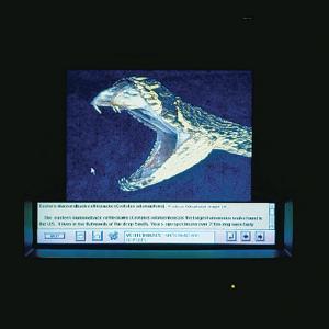 WARD'S Exploring Animal Life CD-ROM