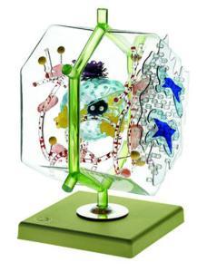 Somso® Liver Cell Model