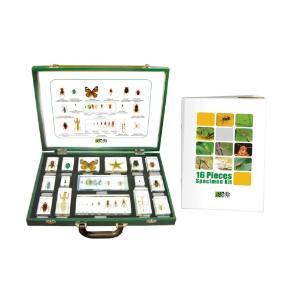 Insects 16 Piece Set