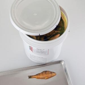 Preserved Freshwater Perch