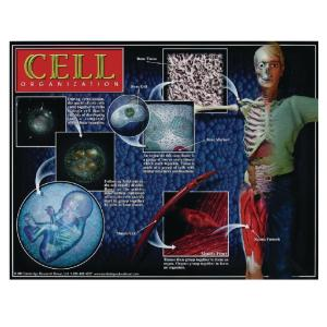 Cell Poster Series Set