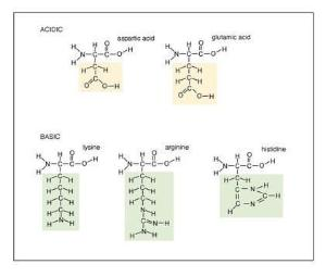 Amino Acids, Set of 20