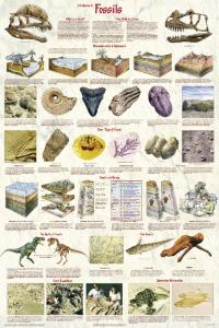 Introduction to Fossils Chart